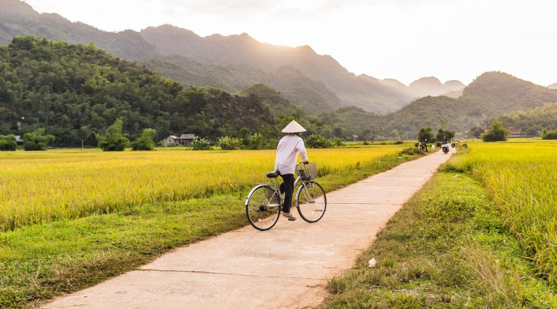 Traveller cycles through the rice fields in Mai Chau, Vietnam.